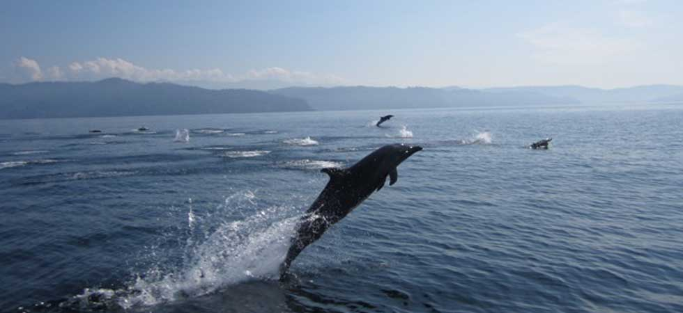 Dolphin watching - Osa Peninsula