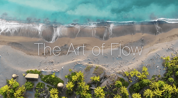 The Art of Flow with Meredith and Bilbo JANUARY 11 to 17, 2020